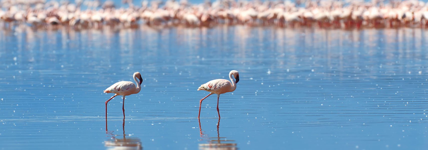 nakuru-lake-flamingos