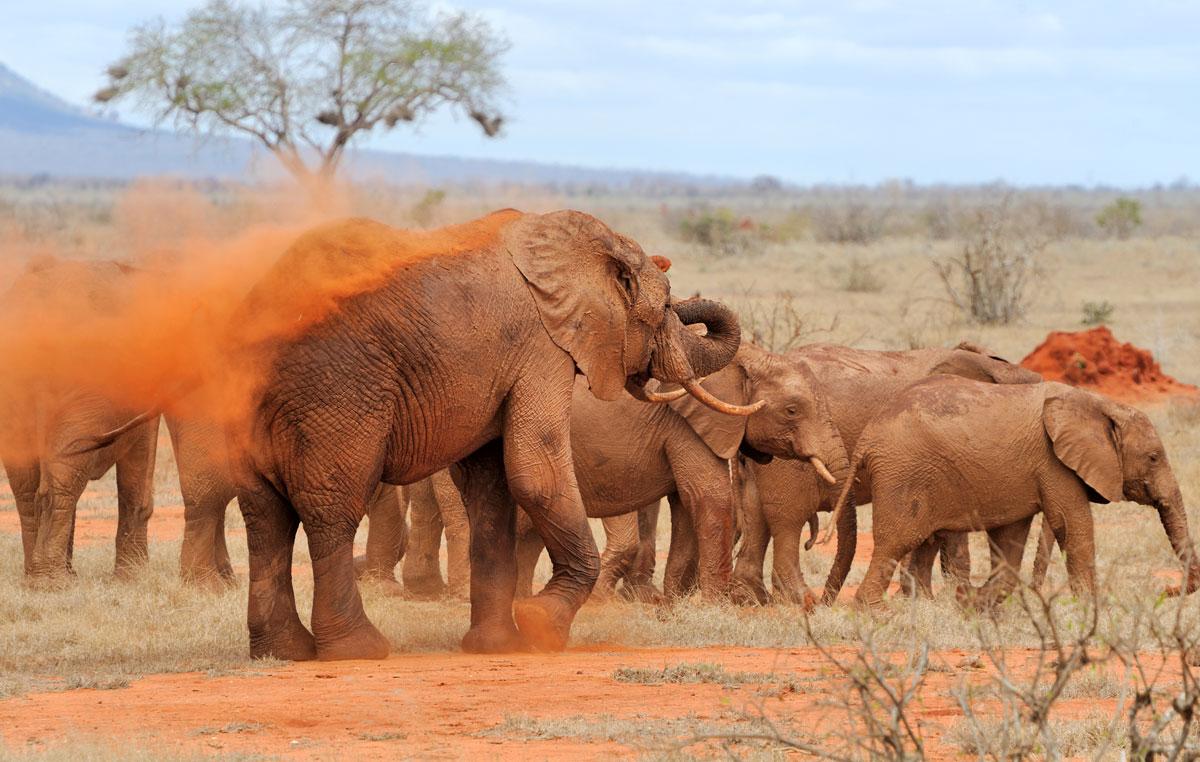 national-park-of-kenya
