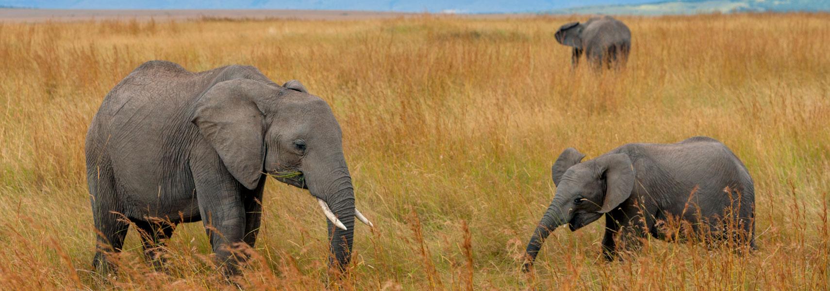 taita-hills-elefanti