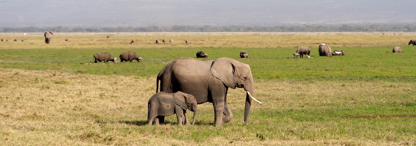 taita-hills-famiglia-di-elefanti