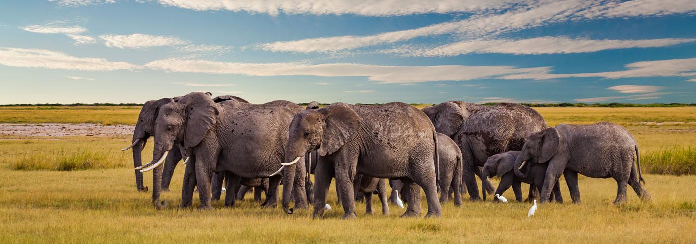 complete-south-luangwa-mandria-di-elefanti