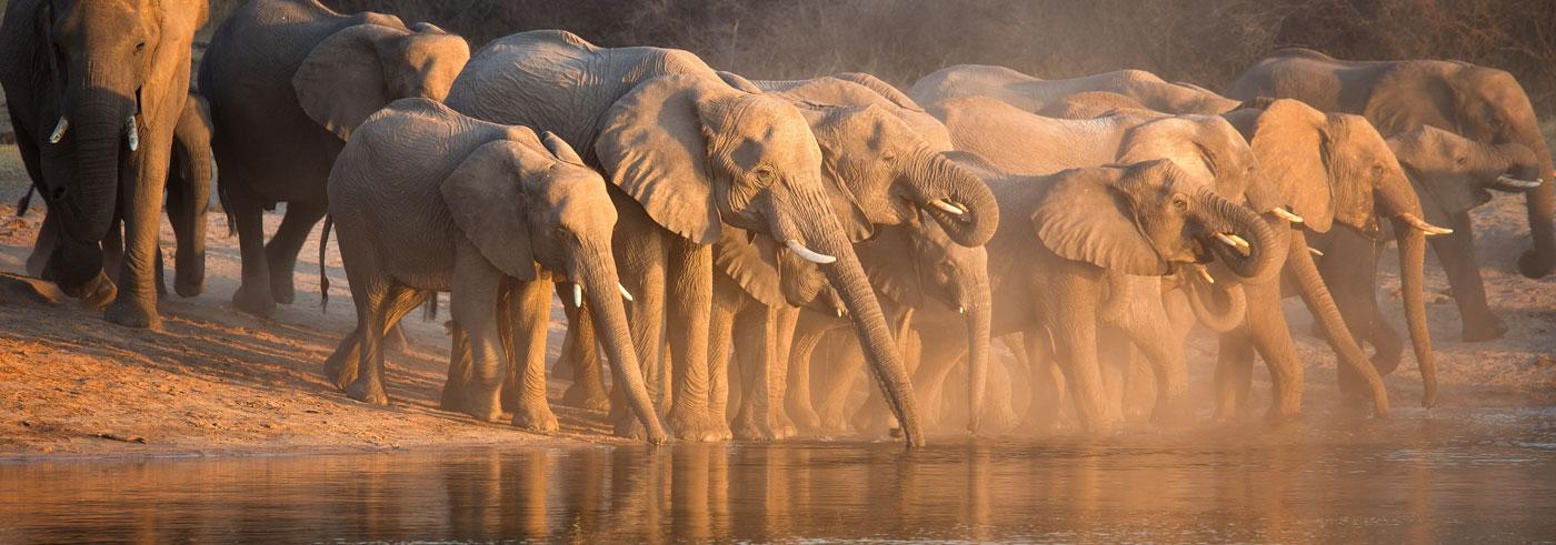 emozioni-nel-bush-mandria-di-elefanti