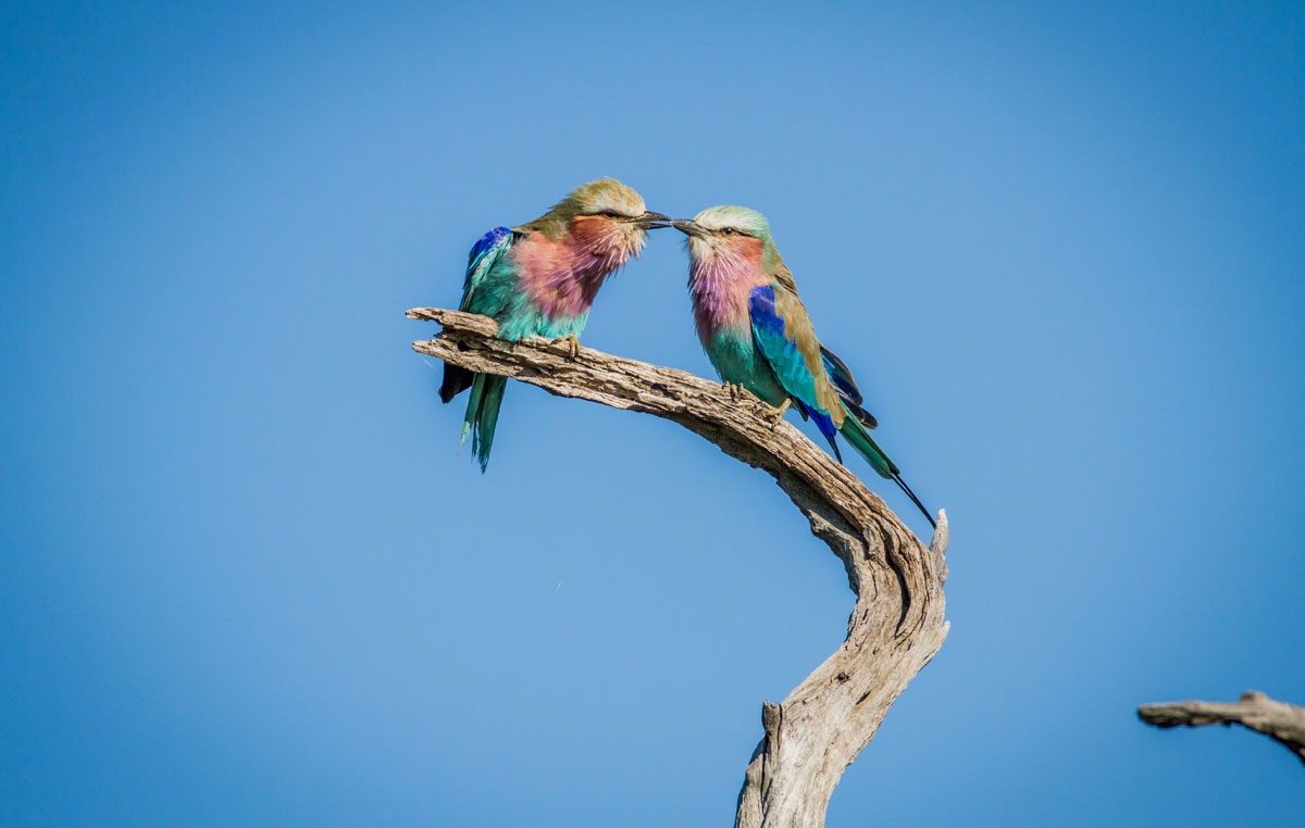 sengo&blue-safari-laghiandaia-marina-pettolilla
