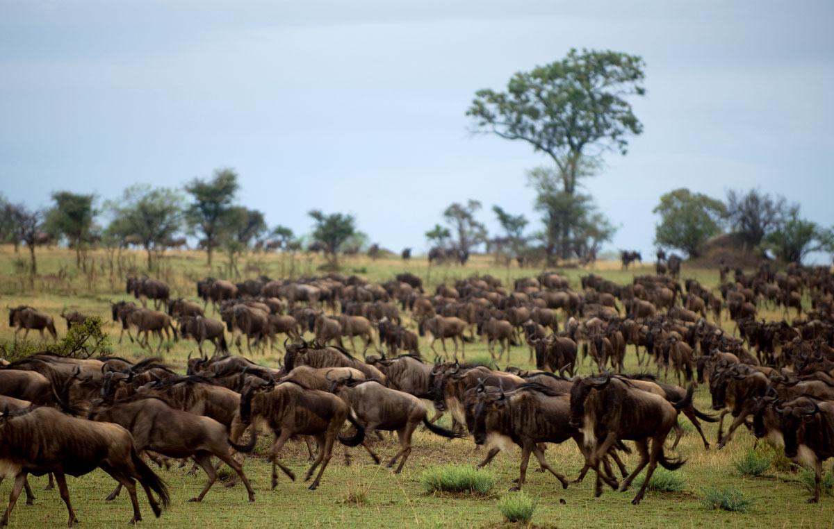 tasengo-safari-la-grande-migrazione